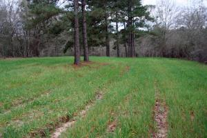 300 Acre Hunting Tract in Schley, GA (13 of 34)