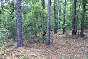 300 Acre Hunting Tract in Schley, GA (25 of 34)