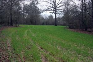 300 Acre Hunting Tract in Schley, GA (7 of 34)