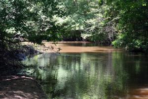 300 Acre Hunting Tract in Schley, GA (3 of 34)