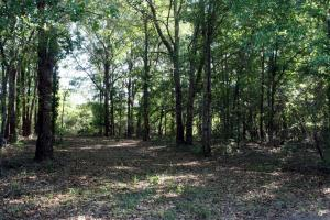 300 Acre Hunting Tract in Schley, GA (6 of 34)