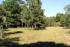300 Acre Hunting Tract in Schley, GA (14 of 34)