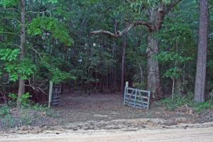 300 Acre Hunting Tract in Schley, GA (21 of 34)