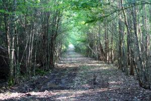 300 Acre Hunting Tract in Schley, GA (17 of 34)