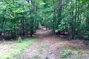 300 Acre Hunting Tract in Schley, GA (31 of 34)