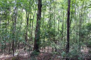 300 Acre Hunting Tract in Schley, GA (33 of 34)