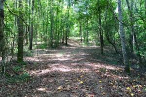 300 Acre Hunting Tract in Schley, GA (4 of 34)
