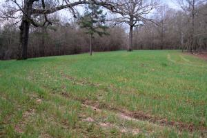 300 Acre Hunting Tract in Schley, GA (22 of 34)
