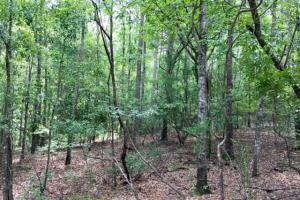 300 Acre Hunting Tract in Schley, GA (29 of 34)