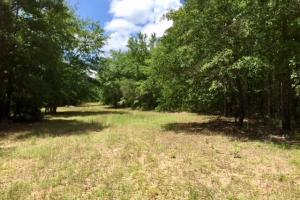 300 Acre Hunting Tract in Schley, GA (27 of 34)