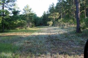 300 Acre Hunting Tract in Schley, GA (23 of 34)