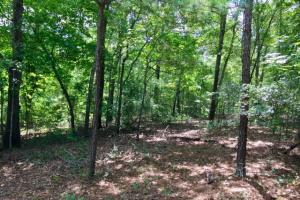 300 Acre Hunting Tract in Schley, GA (28 of 34)