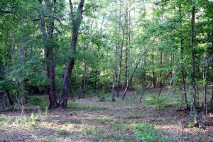 300 Acre Hunting Tract in Schley, GA (19 of 34)
