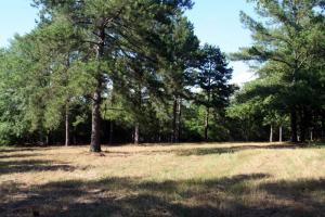 300 Acre Hunting Tract in Schley, GA (20 of 34)