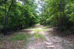 300 Acre Hunting Tract - Schley County GA