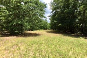 300 Acre Hunting Tract in Schley, GA (26 of 34)