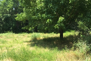 .74 Acre Lot Near White River - Prairie County AR