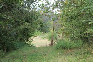 <p>Approaching Well Placed Stand on Food Plot</p>