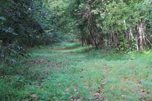 <p>Very Good Woods Road Accesses Property</p>
