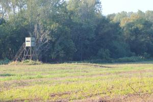 <p>Stand on Spacious Food Plot</p>