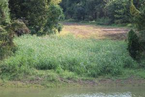 <p>Food Plot View from Levee</p>