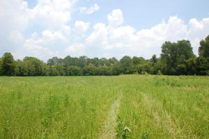 <p>Wildlife Food Plot</p>