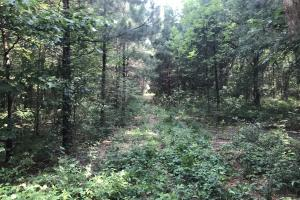 23+/- Acres Timberland, Residential or Development in Monroe, AR (17 of 20)