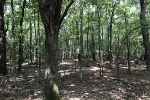 23+/- Acres Timberland, Residential or Development in Monroe, AR (11 of 20)