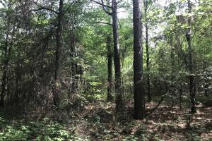 23+/- Acres Timberland, Residential or Development in Monroe, AR (4 of 20)