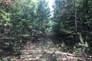23+/- Acres Timberland, Residential or Development in Monroe, AR (9 of 20)