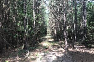 23+/- Acres Timberland, Residential or Development in Monroe, AR (3 of 20)