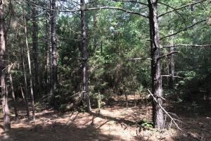 23+/- Acres Timberland, Residential or Development in Monroe, AR (7 of 20)