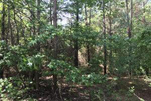 60.29 Acres Timberland & Hunting Property - Grant County AR