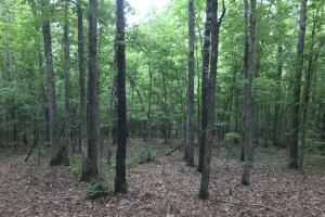 40 Acre Residential Development - Saline County AR