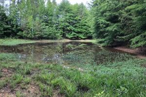 137 ac Hunting / Timber Tract near Big Black River in Montgomery, MS (13 of 41)
