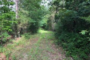 137 ac Hunting / Timber Tract near Big Black River in Montgomery, MS (21 of 41)
