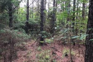 137 ac Hunting / Timber Tract near Big Black River in Montgomery, MS (19 of 41)