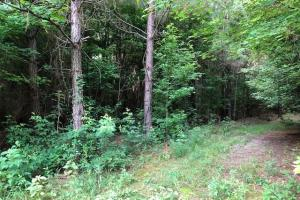 137 ac Hunting / Timber Tract near Big Black River in Montgomery, MS (37 of 41)