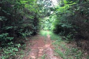 137 ac Hunting / Timber Tract near Big Black River in Montgomery, MS (5 of 41)