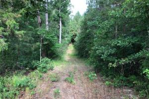 137 ac Hunting / Timber Tract near Big Black River in Montgomery, MS (22 of 41)