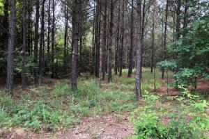 137 ac Hunting / Timber Tract near Big Black River in Montgomery, MS (41 of 41)