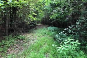 137 ac Hunting / Timber Tract near Big Black River in Montgomery, MS (29 of 41)