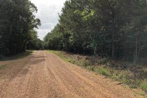 137 ac Hunting / Timber Tract near Big Black River in Montgomery, MS (39 of 41)