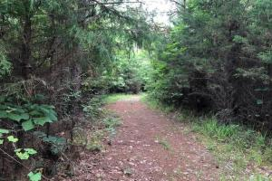 137 ac Hunting / Timber Tract near Big Black River in Montgomery, MS (11 of 41)