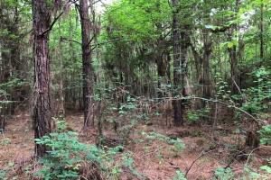 137 ac Hunting / Timber Tract near Big Black River in Montgomery, MS (32 of 41)