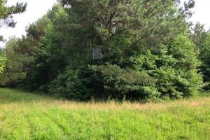 137 ac Hunting / Timber Tract near Big Black River in Montgomery, MS (34 of 41)