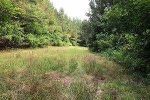 137 ac Hunting / Timber Tract near Big Black River in Montgomery, MS (26 of 41)