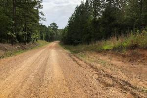 137 ac Hunting / Timber Tract near Big Black River in Montgomery, MS (40 of 41)