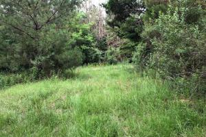 137 ac Hunting / Timber Tract near Big Black River in Montgomery, MS (3 of 41)