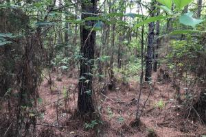 137 ac Hunting / Timber Tract near Big Black River in Montgomery, MS (17 of 41)